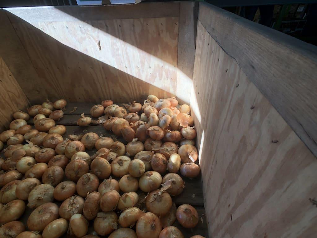 Vidalia Onions - end of 2021 season