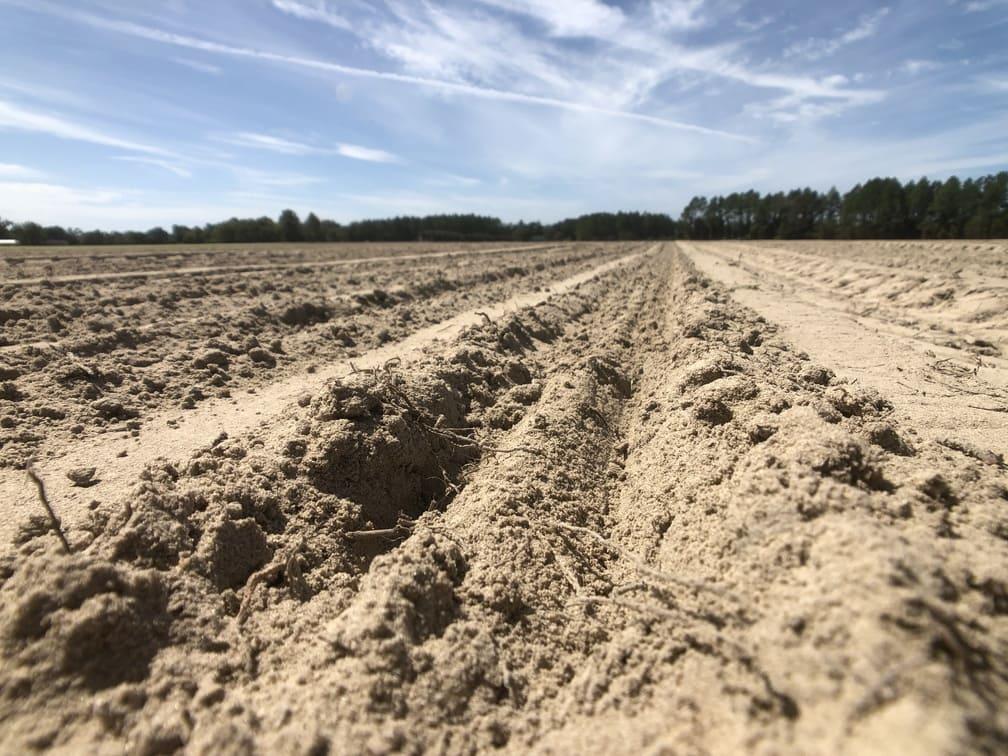 Soil after Vidalia onion planting