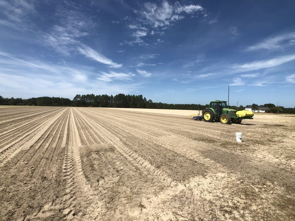 Rows and rows of Vidalia Onion seeds planted